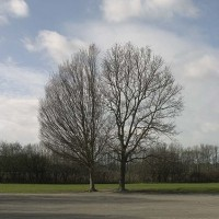 Terry Bond, Terence Bond, 'A Symmetree' 2008. Colour photograph.
